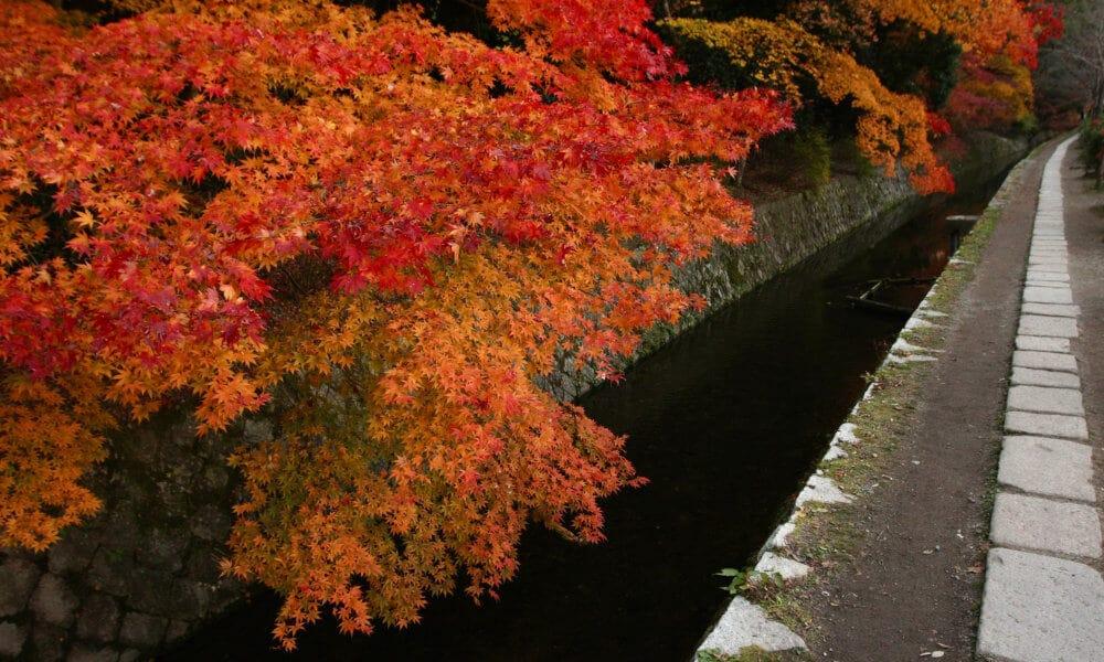 Kyoto sentiero filosofo