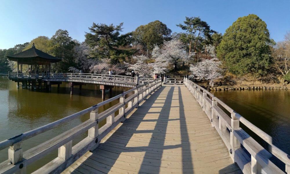 Nara sakura
